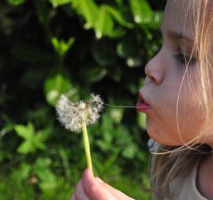 child dandelion84